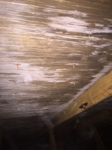 mold and dry rot in an attic