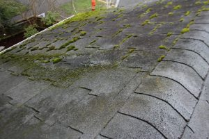 moss covered roof of house